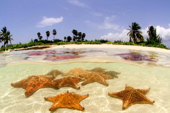 Starfish In The Cayman Islands