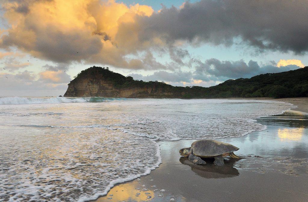 Playa La Flor