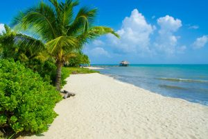 Palm trees lining the shores of Hopkins Beach in Belize