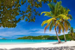 Palm trees on the shore of Magen's Bay in the U.S. Virgin Islands
