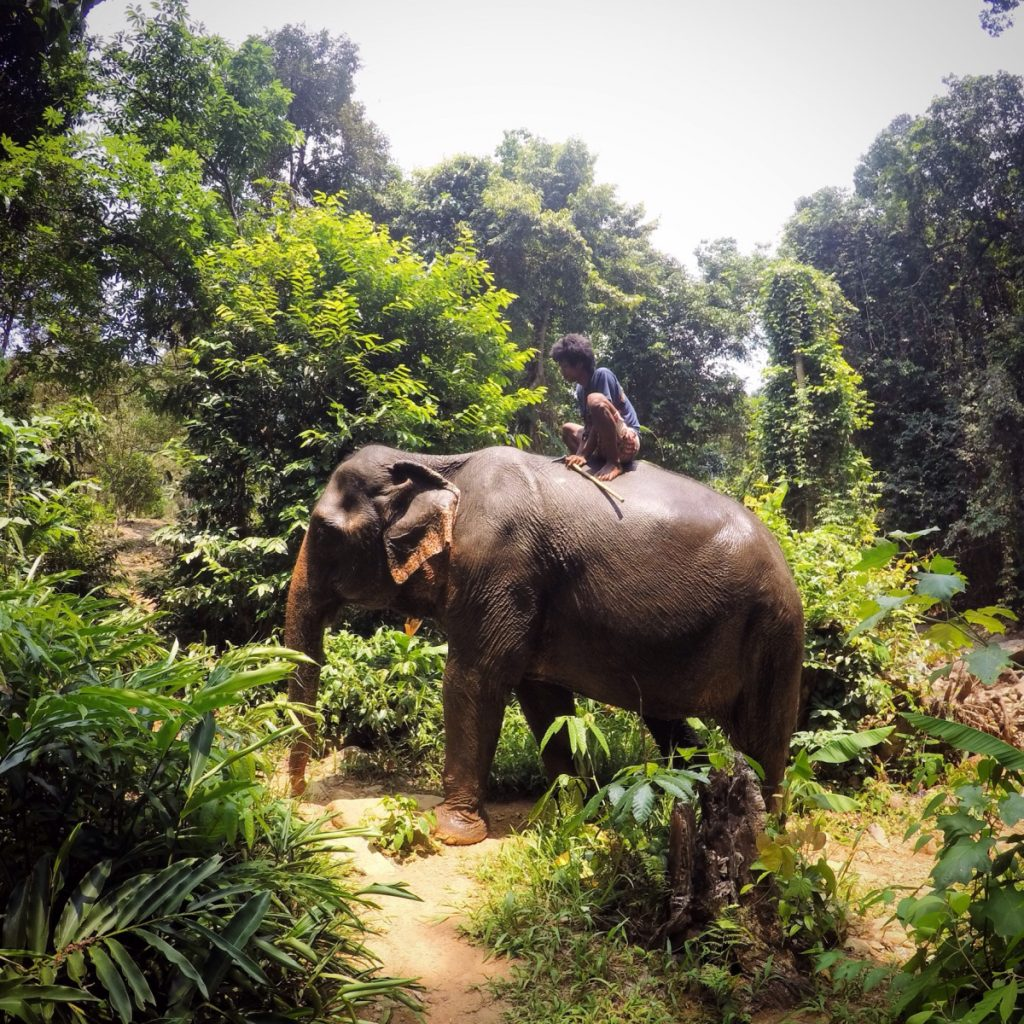 View of an elephant in Chiang May