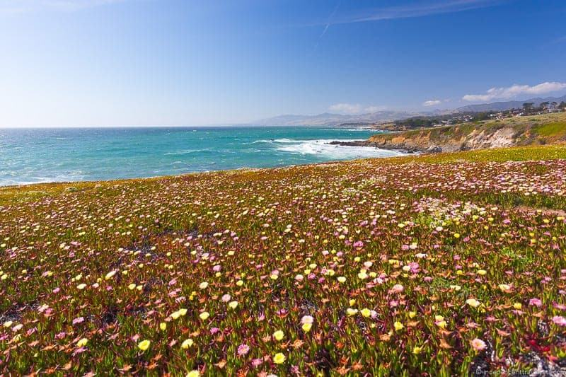 Cambria is a great stop on a California coast road trip