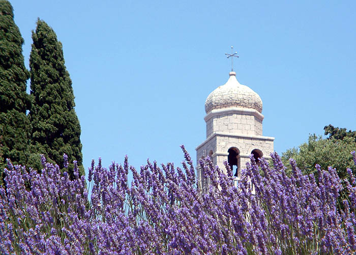 A purple lavender field sprawls out in front of a white tower of the cathedral in the background in June (Jun)
