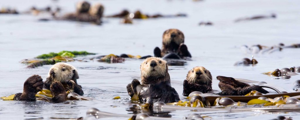 Swim with otters Canada
