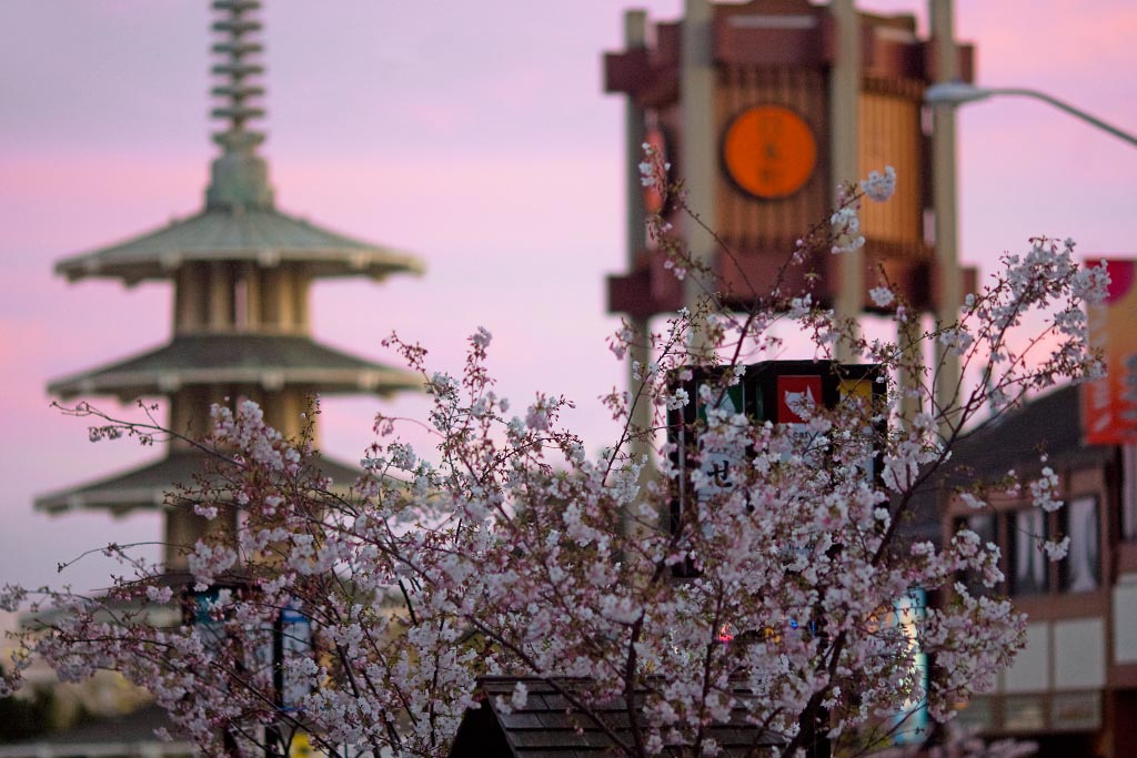 The Cherry Blossom Festival makes San Francisco the prettiest it ever could, turning it into shades of white, purple, and pink