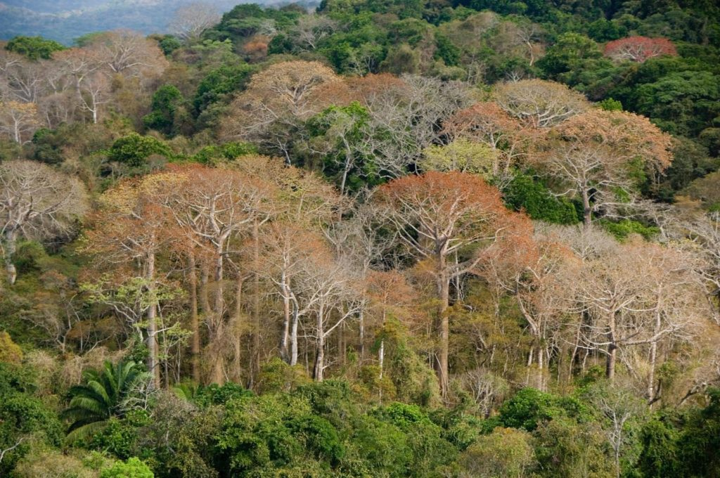 View of the Costa Rica rainforest during dry season