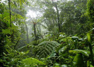 View of the tropical rainforest in Costa Rica in June