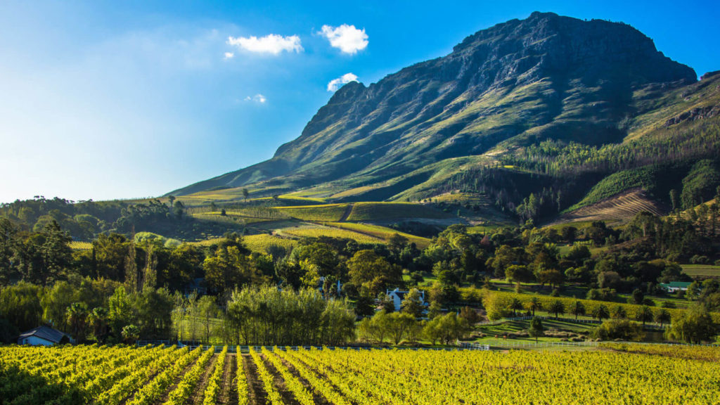 A rural view over the vineyards of Cape Winelands
