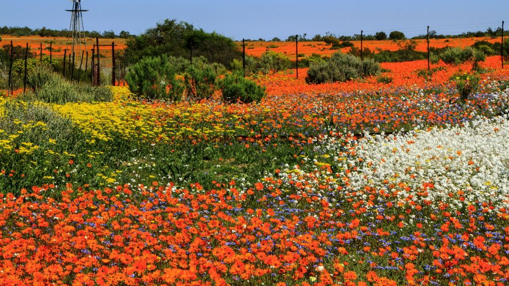 A vast field is painted in bright colors thanks to the blooming flowers