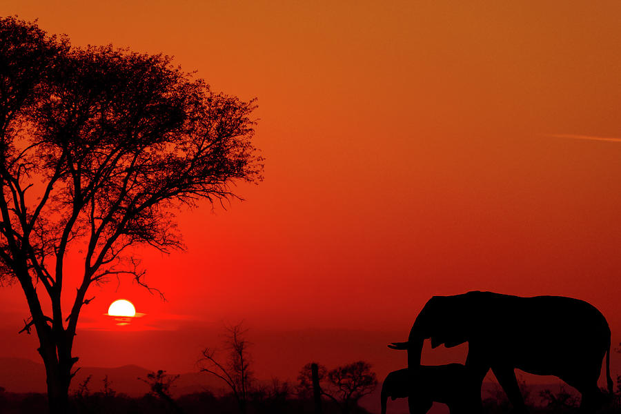 Sunset at a national park in South Africa during the summer months with an elephant in the distance