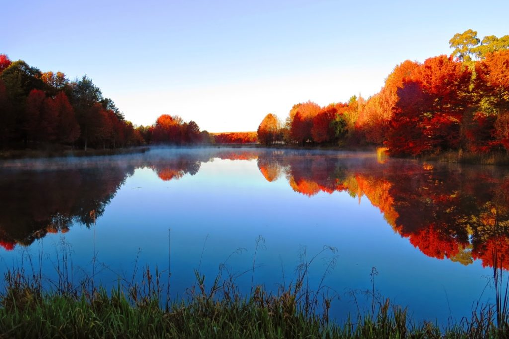 The calm waters of a lake reflect the blue sky and the orange-colored trees in the fall months in South Africa